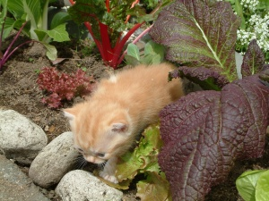 Ms. Ginger in Garden